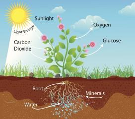 1200-450233561-photosynthesis-process