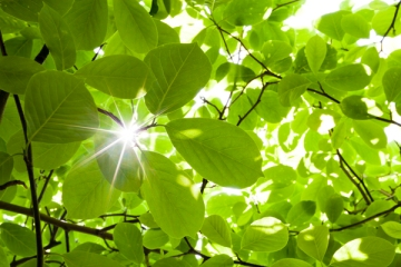 Ray Through Lush Forest Plants
